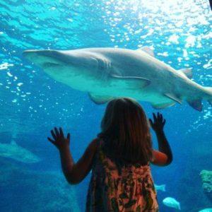 crete aquarium, cretaquarium